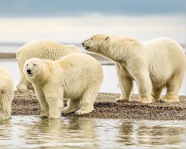 Kingsbridge Travel Alaska Luxury Cruises